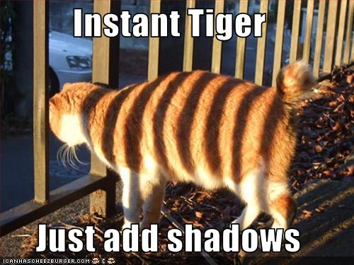 Lolcat tiger stripes